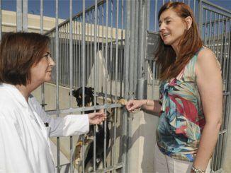 Protección Animal-Adopta a una animal