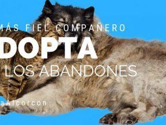 El CIPA de Alcorcón bate récord de adopción de animales este año