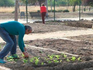 Los mayores de Leganés podrán solicitar uno de los 65 huertos urbanos a partir del día 15 de diciembre