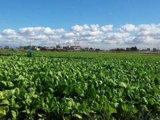 Un grupo de cooperativistas agrícolas japoneses visita el Parque Agrario de Fuenlabrada