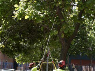 El Ayuntamiento de Leganés coloca insectos en los árboles contra las plagas