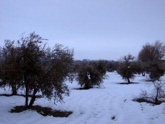 a nieve cubre el terreno en el Real Cortijo de San Isidro, en Aranjuez.