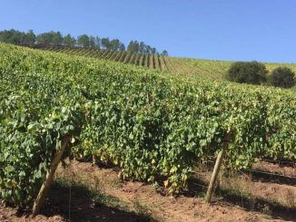ASAJA Castilla-La Mancha advierte del hundimiento del sector vitivinícola