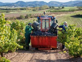 Las comunidades discrepan sobre reparto español de las ayudas de la nueva PAC